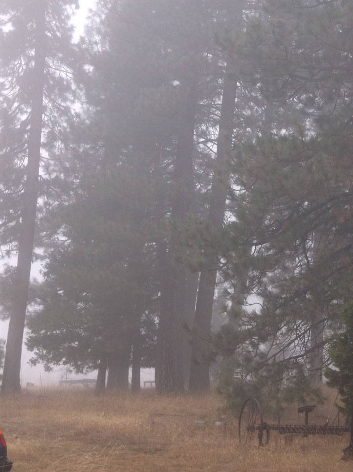Rake in the Fog