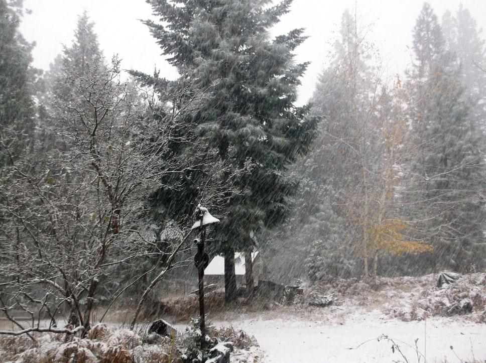 Sunday Snow