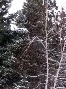 30 Dec 2015 Broken Birch Branch