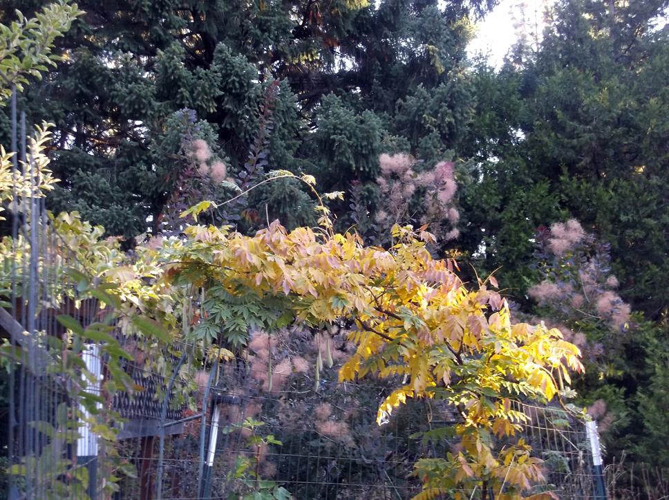 wisteria-and-smoke