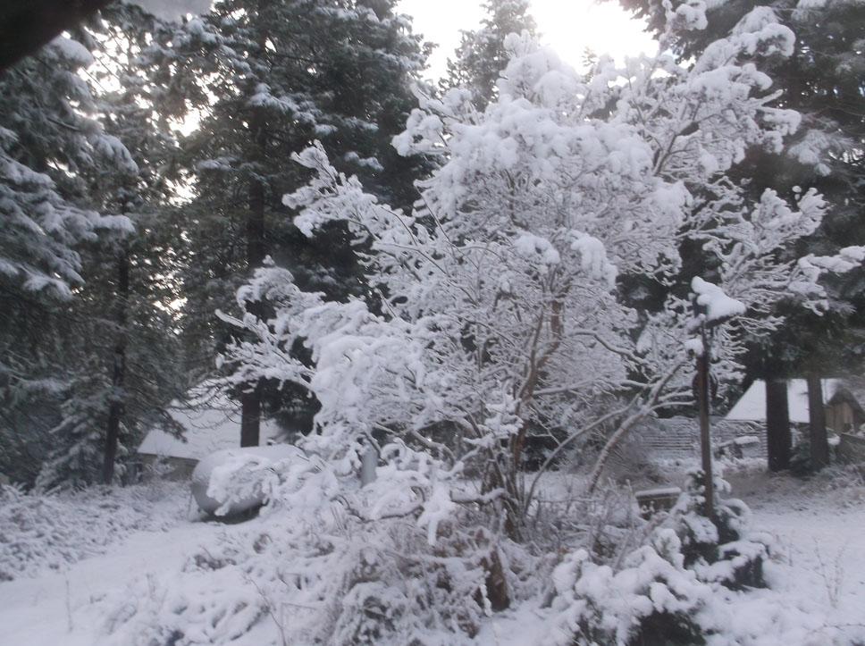 nov-snow-1