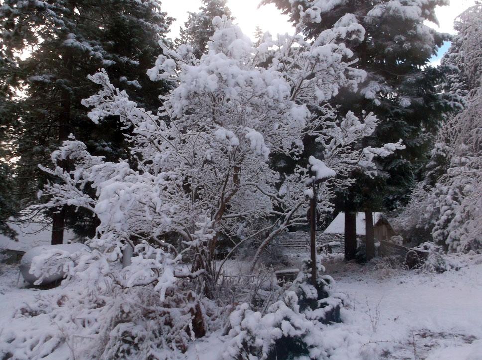 nov-snow-5