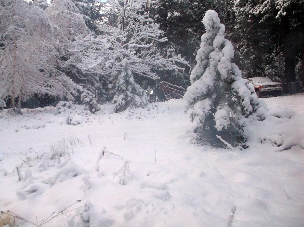 nov-snow-6