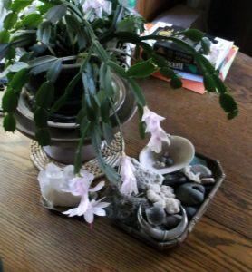 white-cactus