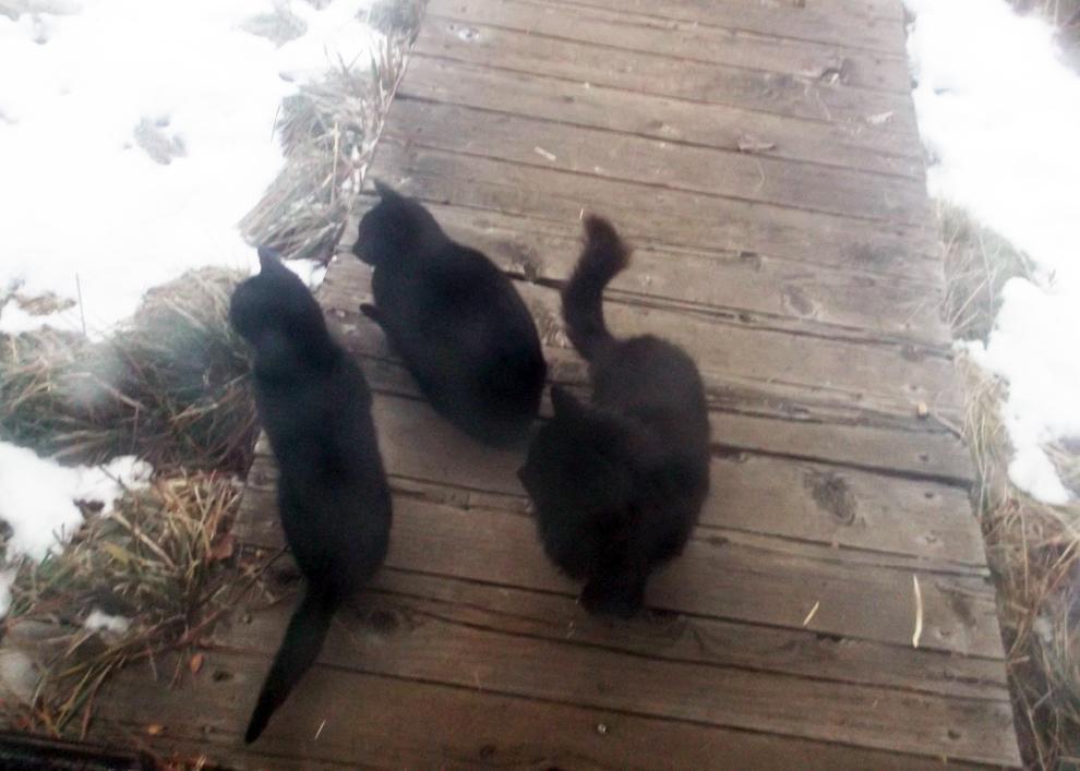 black-trio
