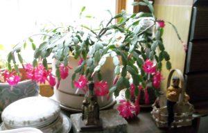 winter-cactus